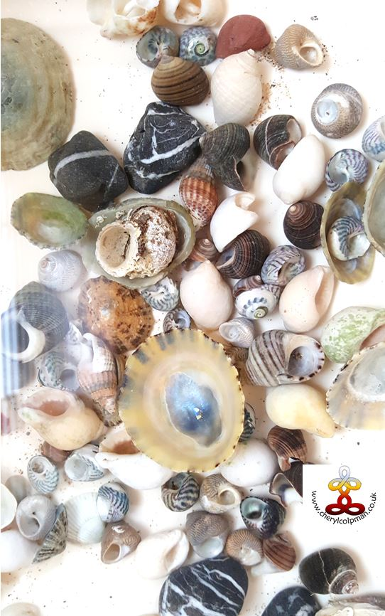 Sea shells seashell healing with Cheryl Colpman