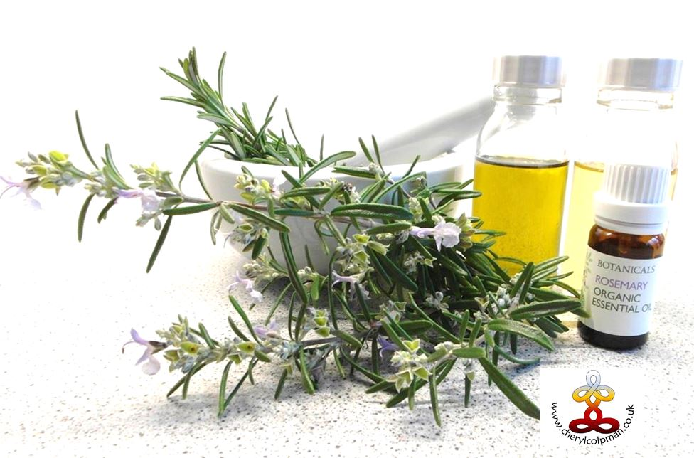 Rosemary herb with bottles of carrier oils and rosemary essential oil plant spirit journey and oil treatment aromatherapy essential oils Cheryl Colpman