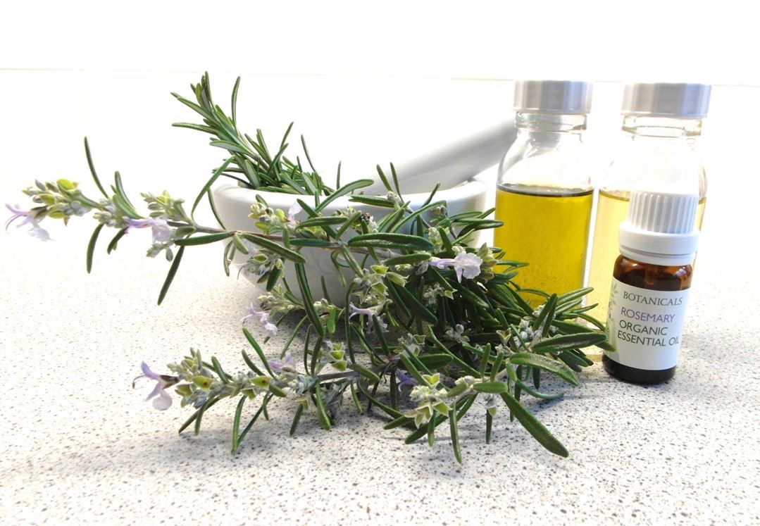 Aromatherapy essential oils shows rosemary herb, bottle of base oil and bottle of rosemary essential oil cherylcolpman.co.uk