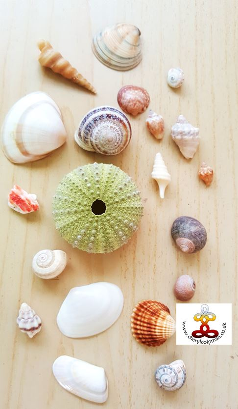 Selection of sea shells for healing with Cheryl Colpman